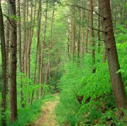 a green forest representing conscious meaning and positive thoughts