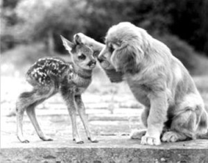 sample acts of kindness showing a puppy being affectionate with a fawn