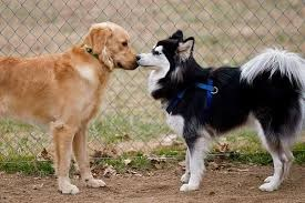 two dogs sniffing each other's noses referencing transformation