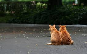 2 cat sitting on a road referencing grief