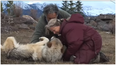 a couple with a wild wolf doing energy healing